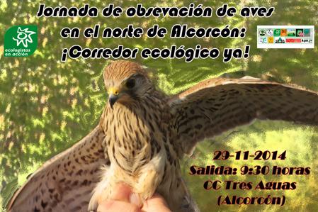 aves_web_peque-44e67
